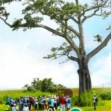 Consultez notre programme 2015 des randonnées et balades