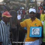 Les courses de chevaux et de Mulets de Sainte-Marie : Une tradition à pérenniser !