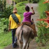 Balades à cheval, en poney et en caleche avec le Parc Naturel de Martinique