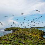 Les Réserves Naturelles de Martinique